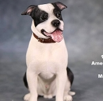 American Staffordshire Terrier (Sitting/Black & White)