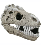 T-Rex Fossil Skull (large)**<BR>