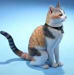 Felis Catus (Domestic Cat) - Calico<br>PRE-ORDER: ETA Q4 2019