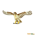 Red-Tailed Hawk<BR>