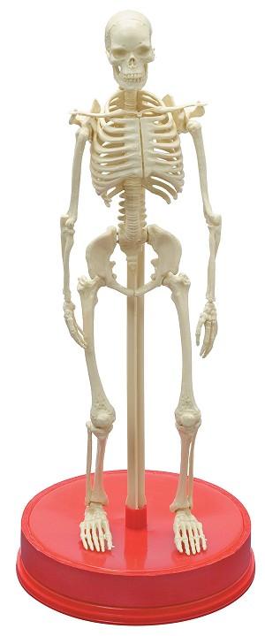 Athletik Male Body (Caucasian, Headless) | Male Civilian