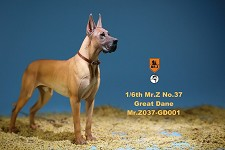 Great Dane (Tan)