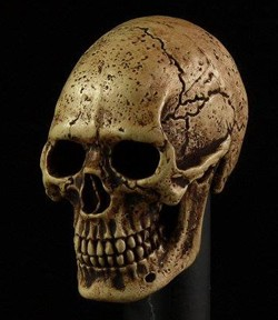 Cannibal Skull<BR>(Darker Pigment)