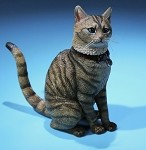 Felis Catus (Domestic Cat) - Gray Striped